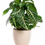 picture of a green house plant in a pot