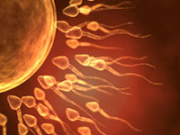 picture of sperm fertilising egg in IVF